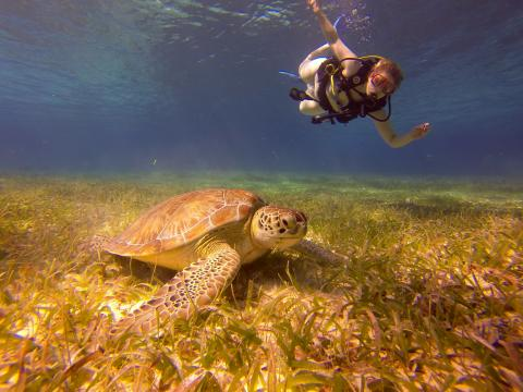 Swiming with Turtle