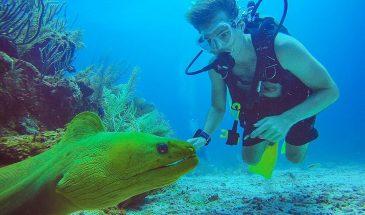 2 Tank Dive - Belize Pro Dive Center