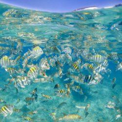 reef-fish-school-01