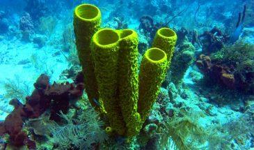 Scuba Diving Turneffe Atoll - Belize Pro Dive Center