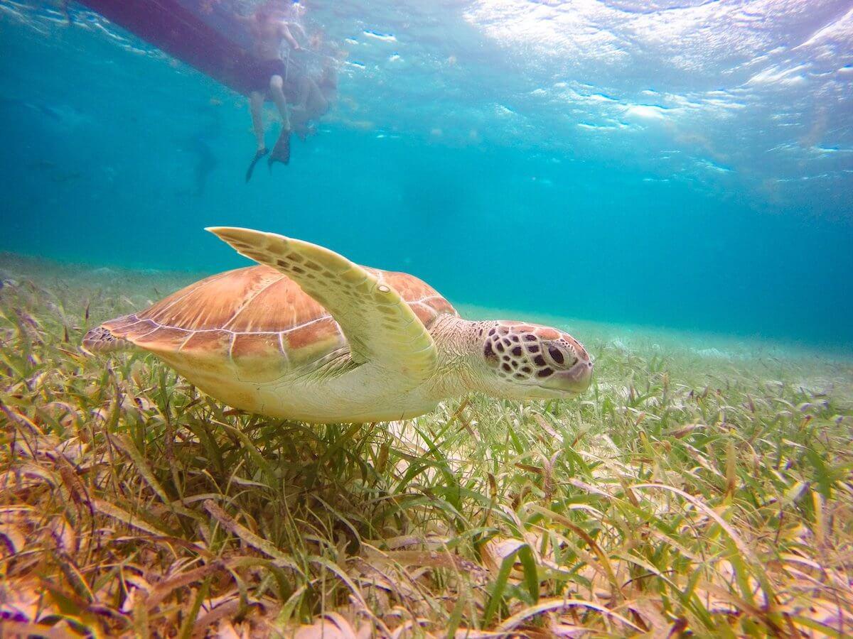 Sea Turtle - Belize Pro Dive Center