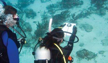 Underwater Navigator - PADI Specialty Course