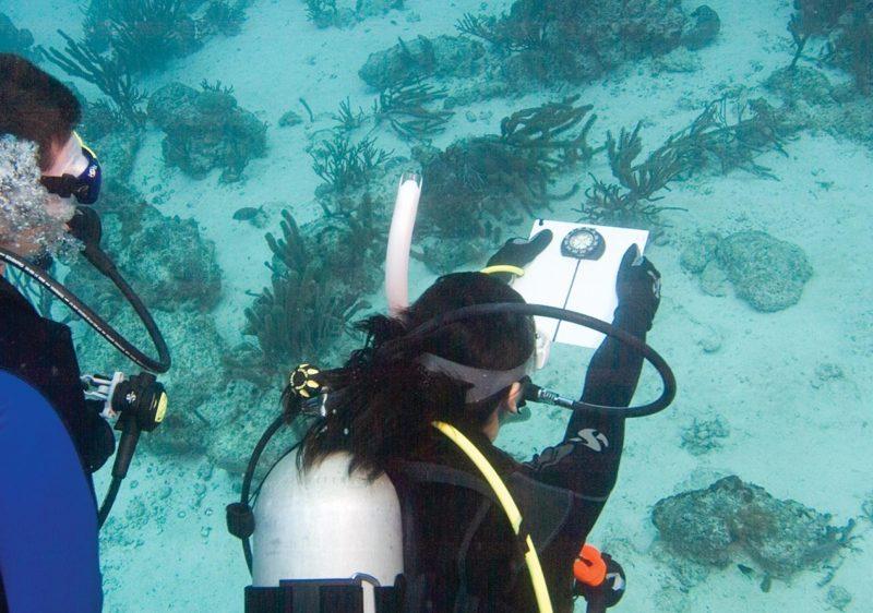 Underwater Navigator – PADI Specialty Course